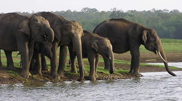 SOUTH INDIA WILDLIFE TOUR PACKAGE