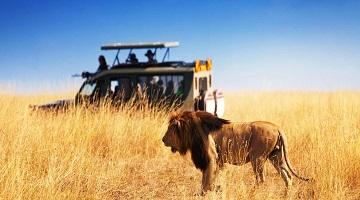 WEST INDIA LION SAFARI AND DESERT