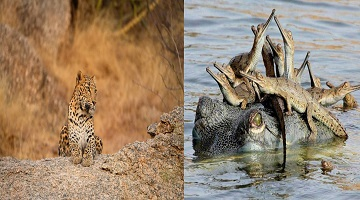 LEGACY OF INDIA WITH THE GANGES & LEOPARDS