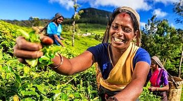 HIGHLIGHTS OF SRI LANKA